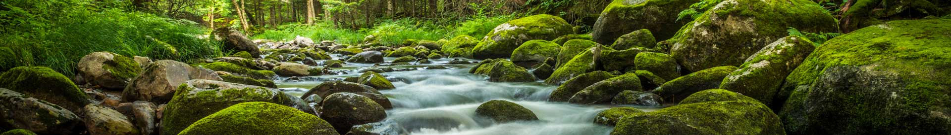 Flowing creek with lush, green foliage